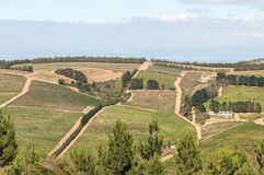 View of a wine farm near Sir Lowrys Pass Royalty Free Stock Image