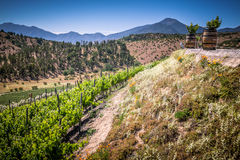 View from the winery in Casablanca, Chile. Beautiful green vineyard view with barrels, hills and mountains on the background. View from Indomita winery in Royalty Free Stock Photos