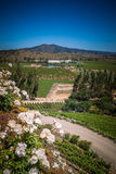 View from the winery with the roses, Casablanca, Chile. Vineyard view with roses from Indomita winery in Casablanca valley,  Region de Valparaiso, Chile Royalty Free Stock Photos