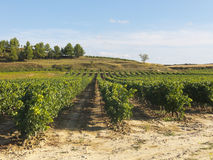 View of a wineyard in la rioja, Spain Stock Photography