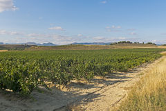 View of a wineyard in la rioja, Spain Royalty Free Stock Images
