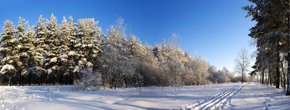View of winter forest Royalty Free Stock Photography