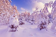 View of winter forest. Stock Photo