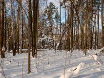 Snow winter forest. View of winter forest covered by snow royalty free stock photos