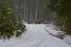 View of a winter forest, Southern Bohemia Royalty Free Stock Photos