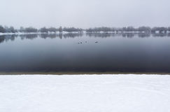 View of the winter lake in foggy morning. Ducks swim on water Royalty Free Stock Photo