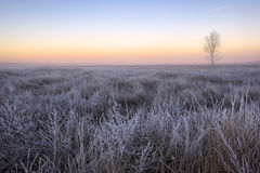View of a winter landscape in the morning during sunrise Royalty Free Stock Photography