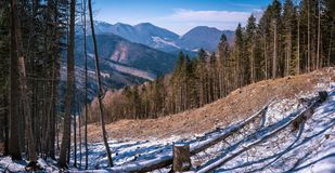View at winter mountains with green trees royalty free stock photography