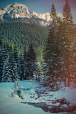 View at winter pine tree forest Stock Images