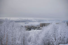 View of the winter port. View of the port, the city and the bay from the hill in the winter, in the foreground bushes in snow Stock Images