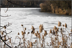 View on winter time cold iced frozen lake with vegetation Royalty Free Stock Photos