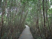 View of wood bridge in Mangrove forest, Phetchaburi, Thailand royalty free stock image