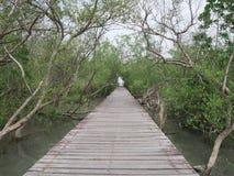 View of wood bridge in Mangrove forest, Phetchaburi, Thailand royalty free stock photos