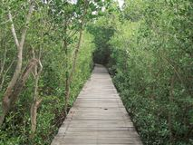 View of wood bridge in Mangrove forest, Phetchaburi, Thailand royalty free stock images