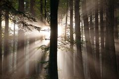 View from wood with contreyour sun rays Royalty Free Stock Photography