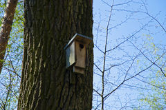 View of a wooden birdhouse mounted on a tree trunk in the spring and summer in the woods under a blue sky Royalty Free Stock Photography