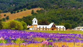View of the wooden church and a field of blooming Lupinus in the national park Torres del Paine, Patagonia, Chile. With selective stock photos