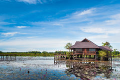 View of  wooden home countryside in lotus lake Royalty Free Stock Image