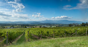 View of the Yarra Valley, near Melbourne Royalty Free Stock Image