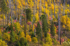 View of Yosemite national park in autumn Royalty Free Stock Photography