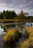 View of Zhuravlinoe marsh Stock Images