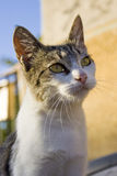 Viewed cat. Nice and viewed house cat Stock Image