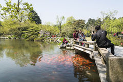 Viewing Fish at Flower Pond scenic spot Stock Photography