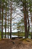 Viewing place. Resting place on high, in the middle of pine trees, by the river of Oulujoki, Vaala royalty free stock photos