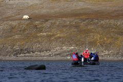 Viewing a Polar Bear. Polar Bear on the horizon, Svalbard, Arctic Circle stock photography
