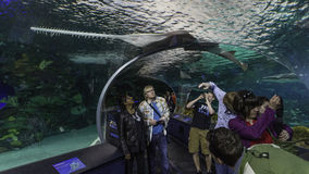 Viewing the Shark Tank at Toronto Aquarium Stock Photos
