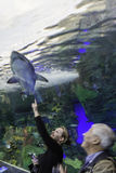 Viewing the Shark Tank at Toronto Aquarium Stock Photo