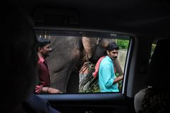 Viewing a walking elefant through car window. Viewing a Walking Elefant on the roadside of Indian road through window of a car stock image