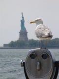 Viewing wolność zdjęcia stock