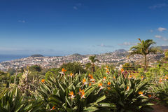 Viewpoint at the botanical garden of Funchal Royalty Free Stock Photo