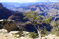 Viewpoint at Grand Canyon Stock Photography