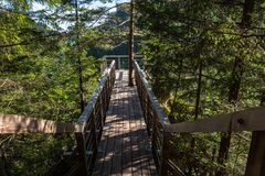 Viewpoint, forest, pure nature, West Tatras, Slovakia stock photos