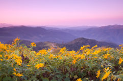 Viewpoint on mountain in the morning Royalty Free Stock Images