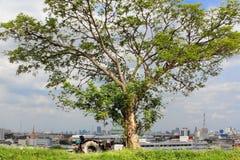 Viewpoint och tree Arkivbild