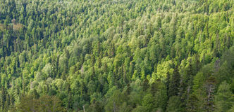 Viewpoint over mixed forest. Stock Photos