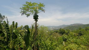 Viewpoint on phuket island. In thailand stock video footage