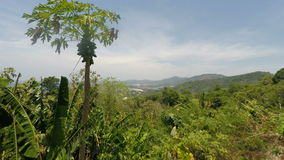 Viewpoint on phuket island. In thailand stock footage