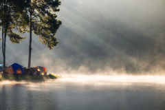 Viewpoint pine forest sunlight shine on fog reservoir in omornin Royalty Free Stock Photography
