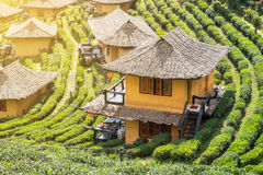 Viewpoint resort earth house in tea plantation at lee wine ban r Stock Images