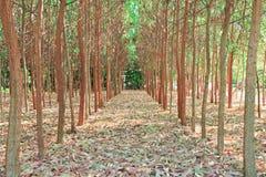 Tree farming. Stock Photos