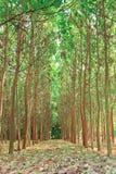 Tree farming. Royalty Free Stock Photo