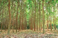Tree farming. Stock Image