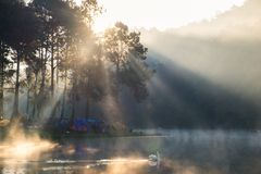 Viewpoint sunlight shine pine forest on foggy reservoir in morni. Ng at pang oung,mae hong son,thailand Royalty Free Stock Photography