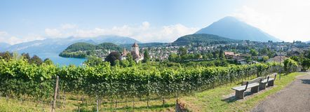 Viewpoint on vineyard hill spiez town, bernese oberland landscap Royalty Free Stock Images