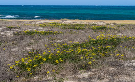 Views around Aruba coastline - flowers Royalty Free Stock Images