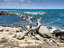 Views around Aruba coastline Stock Photography